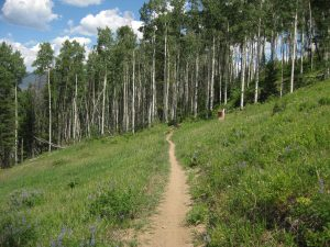 <b>Allie's Way</b><br> Allie's Way Trail looking east and toward a strand of Aspens.