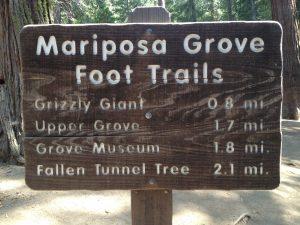 Yosemite National Park – Mariposa Grove of Giant Sequoias
