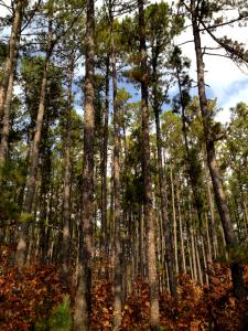 Paddy Creek Wilderness Trip #1
