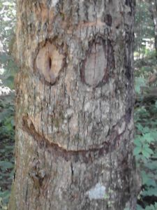 <b>smiling tree</b><br> this was a tree outside the black gap shelter just before the top of springer mountain