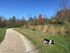 Slate Run Metro Park – Covered Bridge Trail