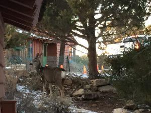 <b>Park Deer</b>