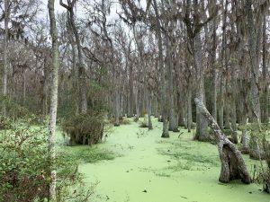 Whooping Crane Pond - November 27, 2020